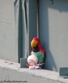 The bullpen parrot.