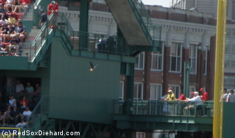 The Fenway hawk swoops in front of the Pavilion seats in left field.