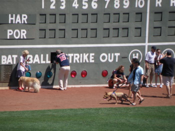 Fans and their pups stroll the warning track before the game.