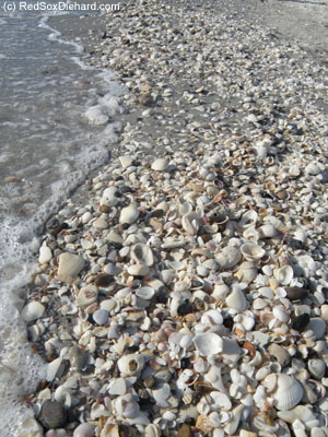 Englewood Beach is great for shelling.