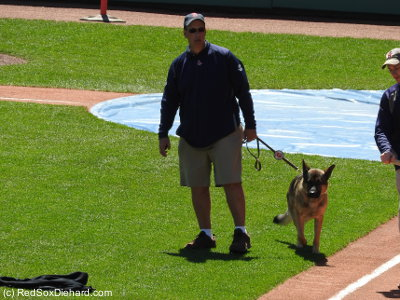Fenway groundskeeper David Mellor and his dog, Drago.